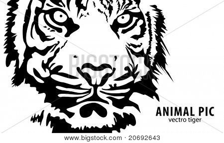 black vector tiger on white background