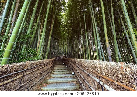 Path To Bamboo Forest, Arashiyama,