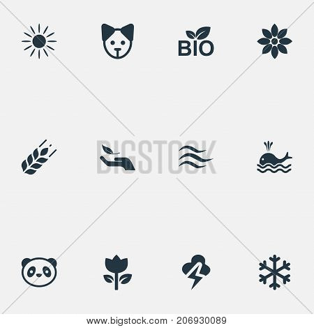 Elements Tulips, Lightning, Nature Protection And Other Synonyms Canine, Flower And Shine.  Vector Illustration Set Of Simple Nature Icons.