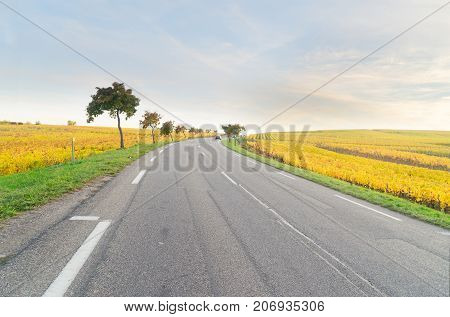Road with yellow autumn vineyards of Route des Vin, France, Alsace