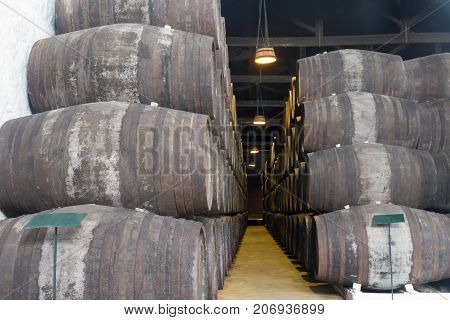 cellar with rows of traditional aged wooden wine barrels