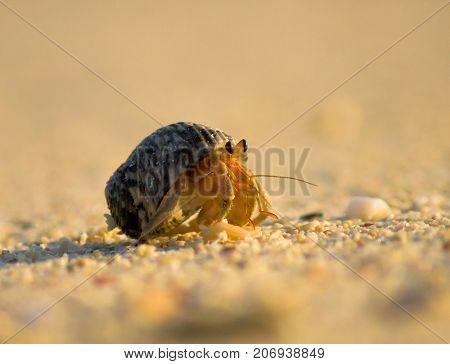 Sand Scene Mobile Homeowner