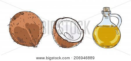 coconut and Coconut oil hand drawn vector art illustration