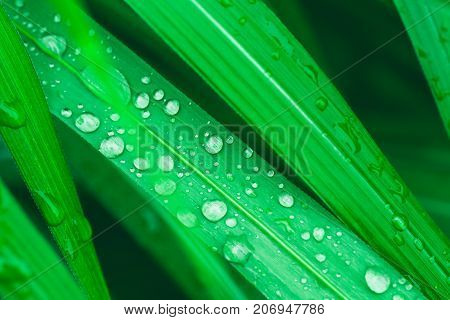 Rain drops on green grass leafs. Clean water after rain in a sunny day. Concept for freshness, clean, natural sunny wellness healthy lifestyle