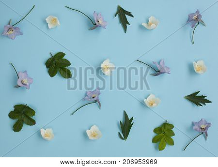 Floral pattern made of delphinium wild rose leaves jasmine on blue background. Flat lay top view. Valentine's background. Floral pattern. Flowers texture.