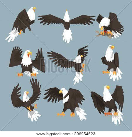 The set consists of nine pictures of bald eagle flying, hunting, eating its prey, and sitting. The set has grey background.
