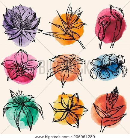 Vector set of Tropical flowers with watercolor design - Water lily, orchid, clematis, plumeria, frangipani, bird of paradise and hibiscus
