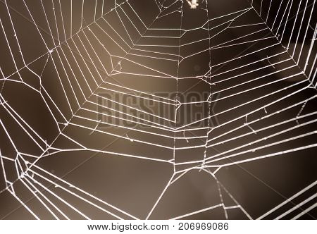 Spider web with colorful background . In the park in nature