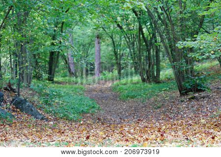 Path leading into the forest of hazel trees leafs on the ground