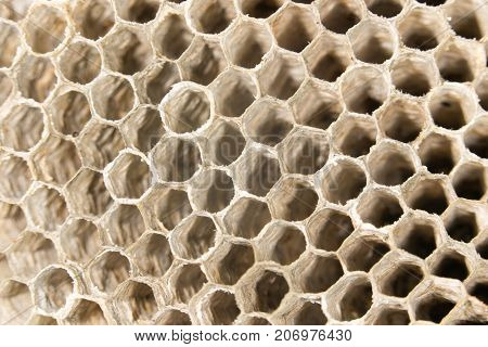 honeycomb as background . In the park in nature
