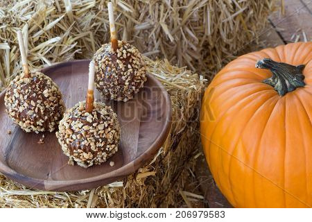 Caramel apples coated with nuts on a wooden plate next to a pumpkin