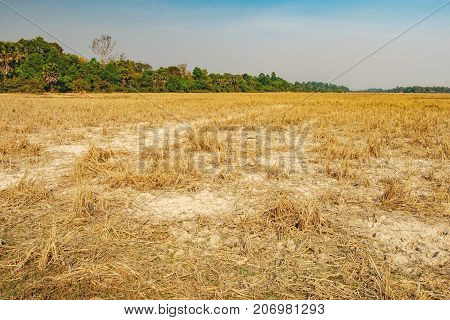 Dry grass at the field outside Siem Reap, Cambodia. Dry season without rain