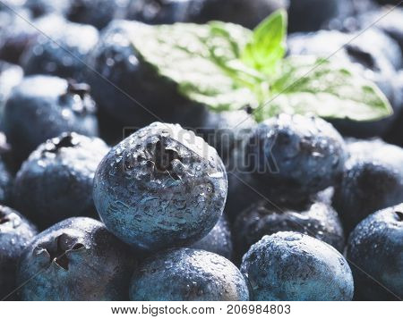 Extreme close up view of blueberries. Selective focus. Copy space. Bilberry on wooden Background. Blueberry antioxidant. Concept for healthy eating and nutrition