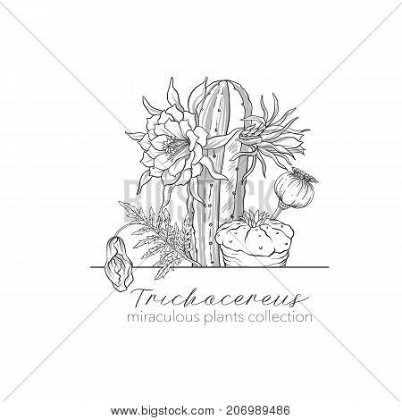 Opium poppy, echinopsis and ophophora. Set of miraculous plants in botanical style. Stock line vector illustration.