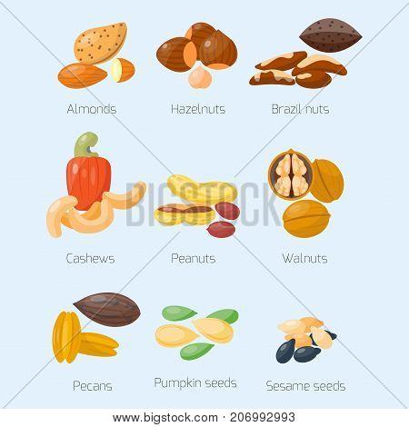 Piles of different nuts pistachio hazelnut almond peanut walnut cashew cedar nut and brazil tasty seed vector illustration. Organic collection nutshell group assortment vegetarian nutrition.