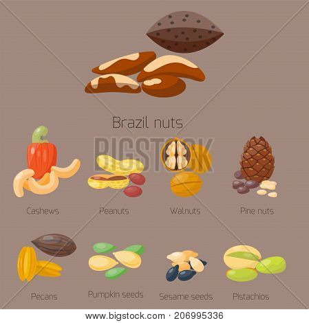 Piles of different nuts pistachio almond peanut walnut, cashew chestnut cedar nut and brazil tasty seed vector illustration. Organic collection nutshell group assortment vegetarian nutrition.