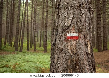 red and white hiking trail marker on a tree trunk of Etna Park, Sicily