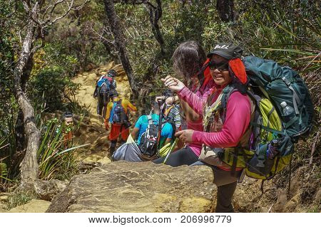 Ranau,Sabah,Malaysia-March13,2016: Group of climbers move down from Laban Rata to Timpohon Gate at the Majestic Mount Kinabalu,Sabah.There are two new summit trails,Ranau Trail & Kota Belud Trail.