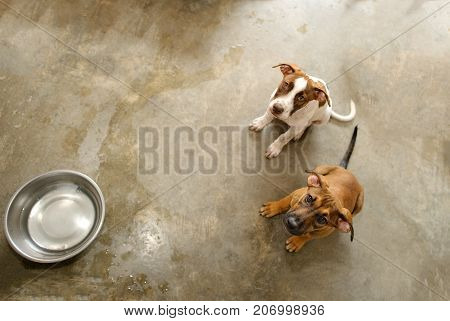 Dog shelter is an animal shelter with two cute dogs looking up wanting someone to take them home.