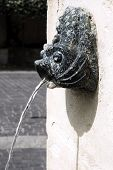 Closeup of a fountain fish head with drop water poster