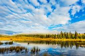 The concept of ecotourism. Patricia Lake among the firs and pines. Water reflects the sky. Cool cloudy morning in the Rocky Mountains poster