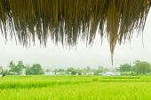 raindrop on hut roof with rice green field backdrop poster