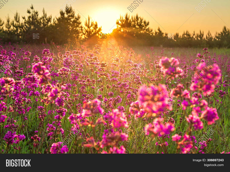 Beautiful Spring Image Photo Free Trial Bigstock