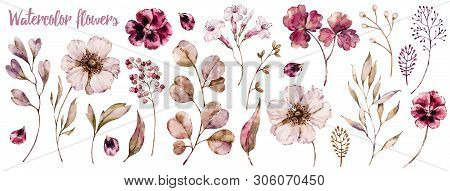 Floral Elements Collection, Watercolor Flower Set. Botanical Template Isolated On White, Handpainted