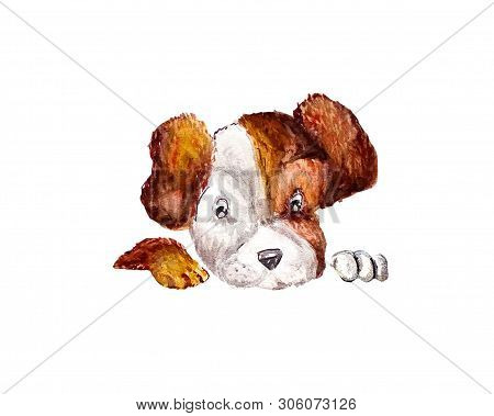 Funny Pup Jack Russell Image & Photo (Free Trial) | Bigstock