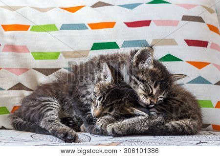 Two Little Tabby Cats Sleeping Togerther On An Armchair At Home.
