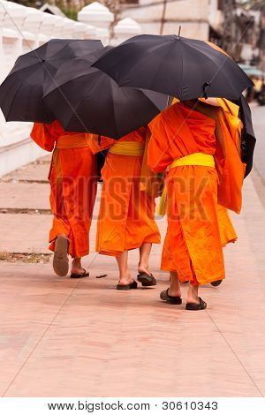 Young monks in Luang Prabang, Laos