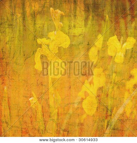 Grunge Background Daffodil Motif