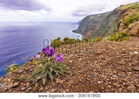Flowers On Coast In Boaventura - Madeira. Portugal