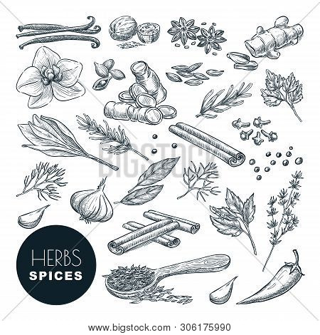 Spices And Herbs Set. Vector Hand Drawn Sketch Illustration, Isolated On White Background. Cinnamon,
