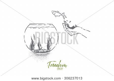 Small Goldfish Jumping In Fishbowl, Hand Let Fish Go, Domestic Pet Leap In Glass Aquarium With Seawe