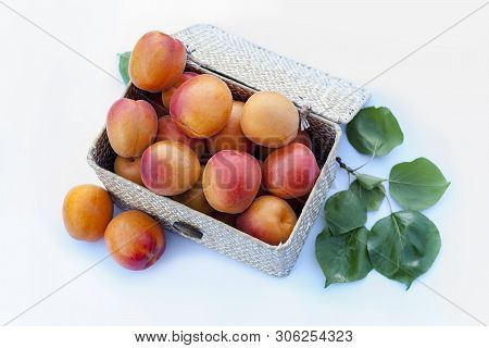 Fresh Organic Apricots In A Natural Fiber Box On White Background With Leaves. Variety: Galta Roja,
