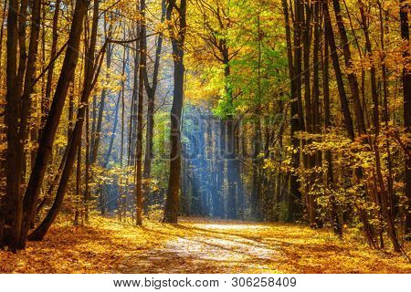 Alley in the sunny autumn park at foggy morning
