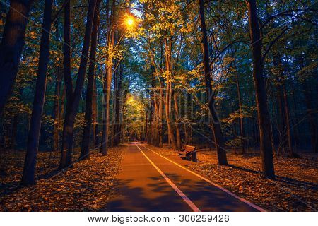 Pathway in the autumn park at dusk