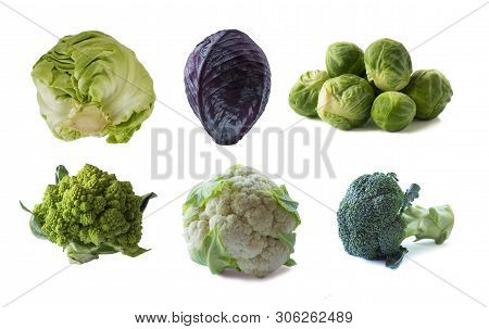 Various Cabbages Isolated On White Background. Brussels Sprouts, Broccoli, Cabbage Romanesco, Caulif