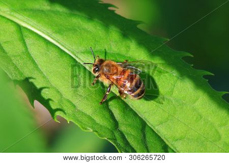 Close up shot of a bee on a  leaf