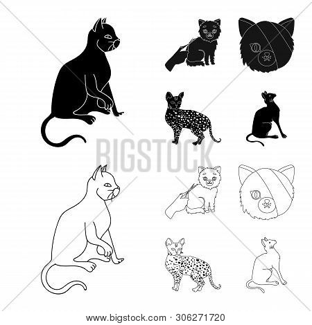 Isolated Object Of Pet And Sphynx Symbol. Collection Of Pet And Fun Vector Icon For Stock.
