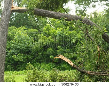 The Roads Throughout The Park Were Reduced To One Lane For Miles Of  Whole Felled Trees, Branches An