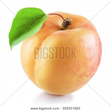 Ripe apricot fruit with green apricot leaf. File contains clipping path.
