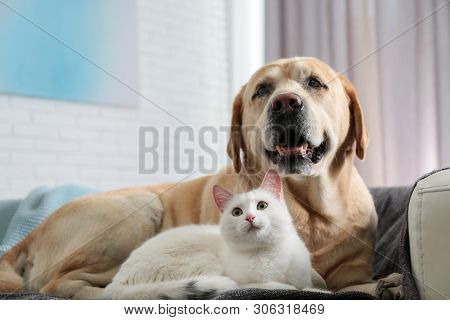 Adorable Dog And Cat Together On Sofa Indoors. Friends Forever