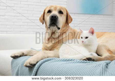 Adorable Dog Looking Into Camera And Cat Together On Sofa Indoors. Friends Forever