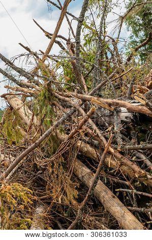 Spruce Birch Twigs Broken Strong Wind Heap Broken Old High Background Base