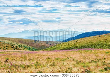 Grassy Meadow In The Mountain Landscape. Purple Fire Weed Flowers Among The Grass. Ridge In The Dist