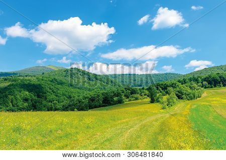 Beautiful Countryside Landscape. Wild Flowers On Rural Field Near The Forest On A Tranquil Summer Da