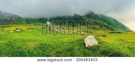 Flock Of Sheep In Mountains. Bad Weather Panoramic Landscape. Rocks Among The Grass. Overcast Summer