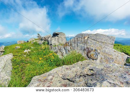 Summer Nature Scene On Top Of A Hill. Yellow Dandelions Among Rocks On A Grassy Slope. Sunny Weather